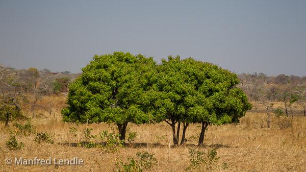 2019_Zambia_1D-5877.jpg