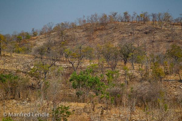 2019_Zambia_1D-5906.jpg