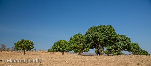 2019_Zambia_5D-6896.jpg
