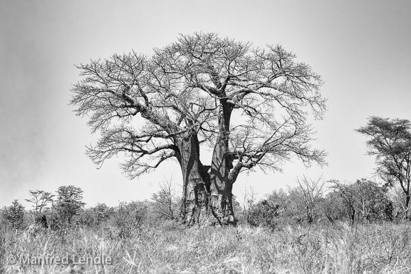 2019_Zambia_1D-3309-Bearbeitet.jpg