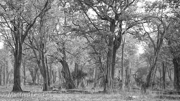 2019_Zambia_5D-1896-Bearbeitet.jpg