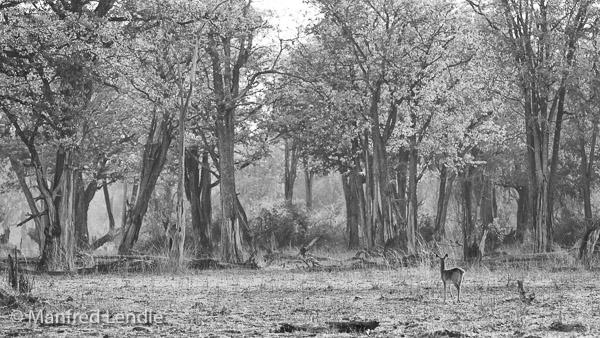 2019_Zambia_5D-1909-Bearbeitet.jpg