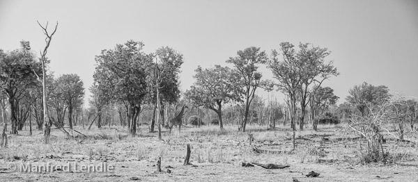 2019_Zambia_5D-4878-Bearbeitet.jpg